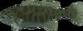 Smallmouth bass raw.png