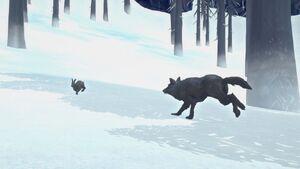 Wolf pursuit