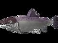 Coho salmon.png