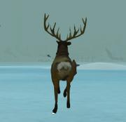 Deer running away