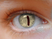 Bill Cipher Eye 2