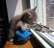Sniper-Cat-random-32283357-500-444