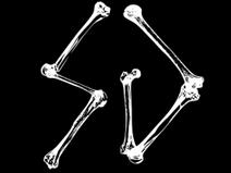 1307623986 SG bones logo