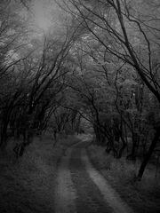 Wyld Wood by Alharaca