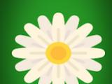 Flower Poof