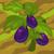 Eggplant 70