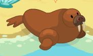 Walrus harvest