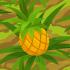 Pineapple 70