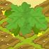 Zucchini 70