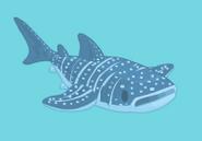 Whaleshark baby