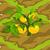 Yellow Tomatoes 70