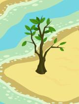 File:Baby Orange Tree.jpg