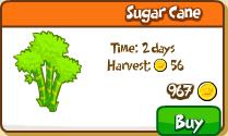 Sugar cane shop new