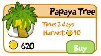 File:PapayaTree.jpg