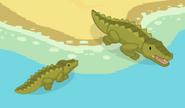 Adult-Crocodile5
