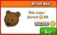 Brown beaa