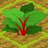 Rhubarb 70