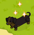 Dachshund harvestable
