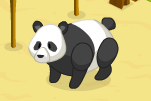 Grown Panda