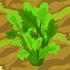 Celery 70