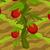 Passion fruit 70