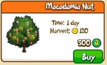 Macadamia nut shop