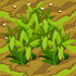 Green Lentils 70