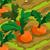 Carrot 70
