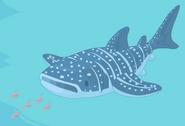 Whaleshark action