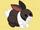Jin Rabbit