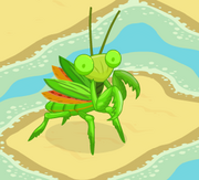 Adult Mantis