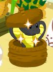 Snake charmer basket harvest