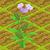 Sesame Seed 70