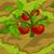 Tomatoes 70