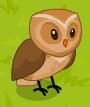 Owl adult
