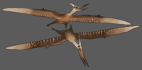 Free Choice Pteranodon The Isle