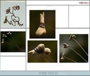 Bolas Concept Art The Isle