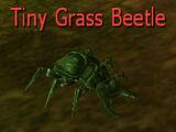 Tiny Grass Beetle