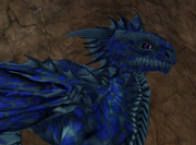 Hatchling Dragon