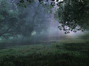 Beregard Forest