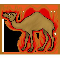 Camel evo