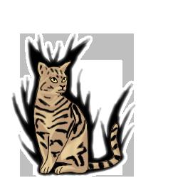 Cat evo
