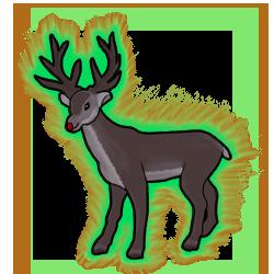 Rudolph evo