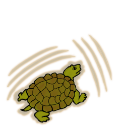 Turtle evo