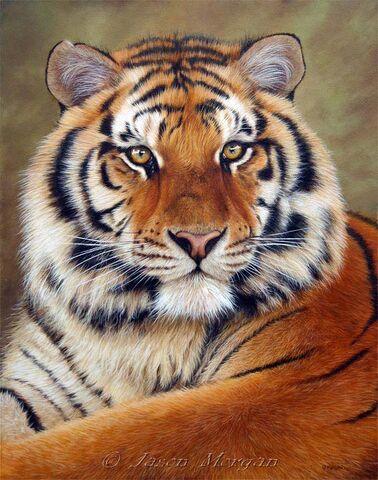 File:Siberian-tiger-6.jpg