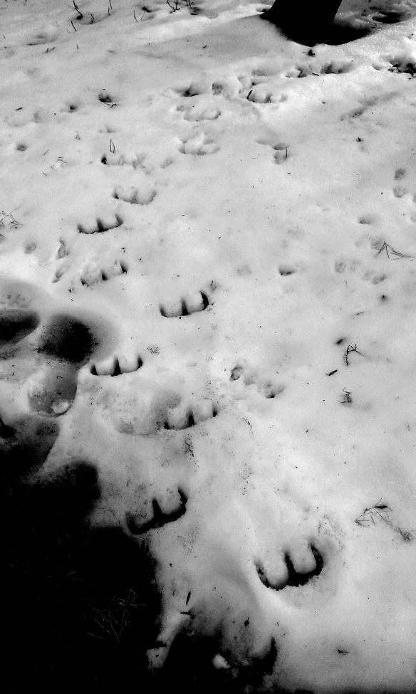 Image result for devil's footprints