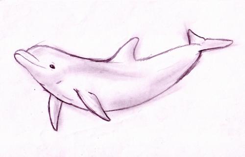 Greek dolphin its something wiki fandom powered by wikia wwd thecheapjerseys Choice Image