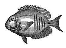 Fish+graphicsfairy2