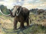 Baraboo Elephants