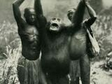 Bili Ape